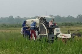 Panen Raya, Petani di Sumsel Terapkan Protokol Pencegahan…