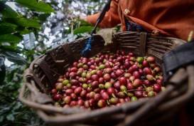 Kementan Upayakan Jaga Ketersediaan Kopi dan Kakao