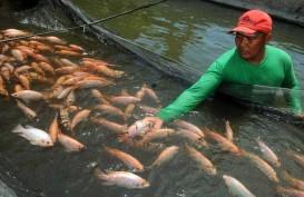 Dukung Agrowisata, Perikanan Air Tawar Dikembangkan di Kupang