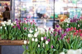 Demi Jaga Jarak Sosial, 100.000 Tanaman Tulip di Jepang…