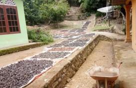 Sejumput Kisah Tauke dan Petani Gambir yang Terbelenggu Corona