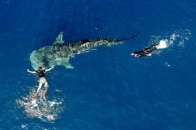 Daftar Daerah Potensial untuk Desa Wisata Ikan Hiu…