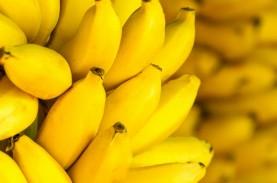 Harga Hasil Perkebunan di Ambon Melonjak Tajam 100…