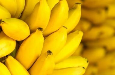 Harga Hasil Perkebunan di Ambon Melonjak Tajam 100 Persen