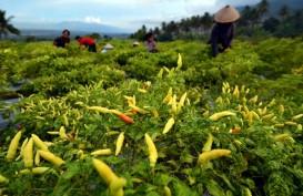 Penjualan Bibit Tanaman Pangan Melonjak 50 Persen di Tengah Pandemi Corona
