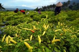 Penjualan Bibit Tanaman Pangan Melonjak 50 Persen…