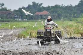 Anggota Dewan : Pak Jokowi Harus Belajar dari Gagal…
