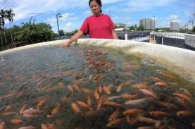 Terdampak Banjir, Pembudidaya Ikan Dapat Klaim Asuransi