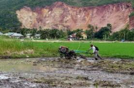 Proyek Cetak Sawah Baru, Menyemai Tuah di Tanah Rawa