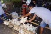Penyerapan Ayam Ras Peternak oleh 10 Perusahaan Capai 14,9 Persen