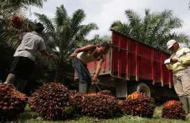 Harga CPO Melorot, Permintaan Domestik Astra Agro Stabil
