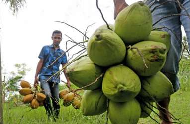 Pemprov Sulut Dorong Pengembangan Produk Olahan Kelapa untuk Petani