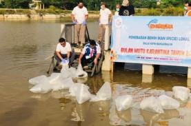 Ikan Pupuyu, Plasma Nutfah Asli Kalimantan yang Dilestarikan