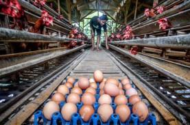 Survei BI: Jelang Lebaran, Penurunan Harga Telur Sumbang…
