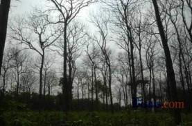 Dampak Virus Corona, Pengusaha Hutan Berharap Pemulihan…