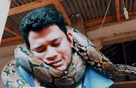 Remaja Klungkung hampir Sekarat Lehernya Dililit Piton. Ini Trik Lepas Lilitan Piton