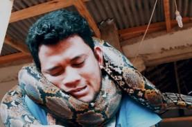 Remaja Klungkung hampir Sekarat Lehernya Dililit Piton.…