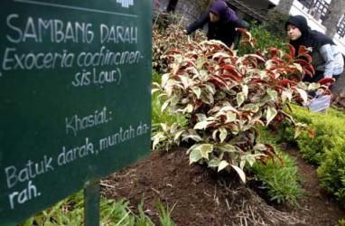 Jaga Stamina, Kemenkes Anjurkan Masyarakat Manfaatkan Obat Tradisional