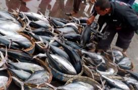 Ekspor Tuna dan Lobster Padang Terhenti
