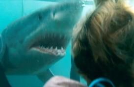 Sinopsis Film Shark Night, Tayang Malam Ini di Bioskop TransTV Pukul 23.00 WIB