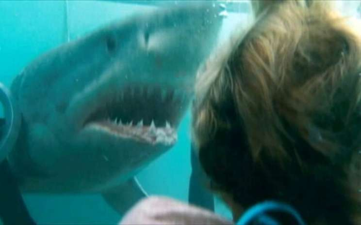 Film Shark Night tayang malam ini di Bioskop TransTV