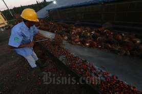 Petani Sawit Tak Keberatan dengan Kenaikan Pungutan…