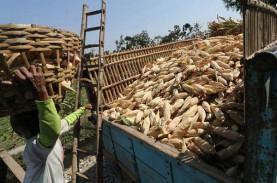 Gorontalo Bersiap Ekspor 12.000 Ton Jagung ke Filipina…