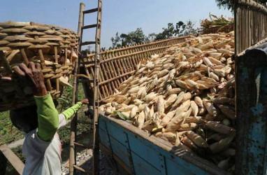 Gorontalo Bersiap Ekspor 12.000 Ton Jagung ke Filipina di Tengah Pandemi Covid-19