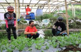 Penjualan Sayur Organik Meroket 300 Persen saat Pandemi Covid-19