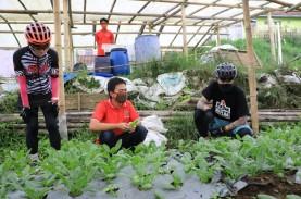 Penjualan Sayur Organik Meroket 300 Persen saat Pandemi…