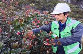 PT Freeport Indonesia Temukan Satu Spesies Tumbuhan Baru di Papua