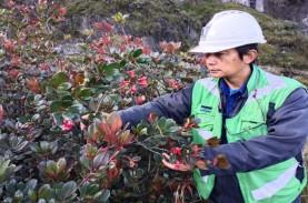 PT Freeport Indonesia Temukan Satu Spesies Tumbuhan…