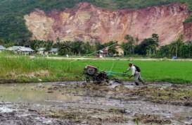 Ketersedian Padi di Sumedang Tetap Terjaga di Tengah Penurunan Luas Lahan Pertanian