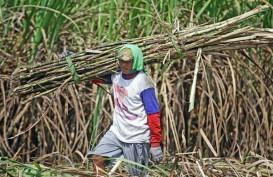 MUSIM GILING 2020 : Produksi Gula Ditarget Melonjak