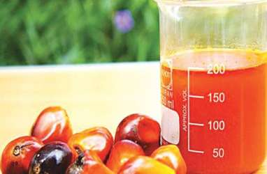 Program Biodiesel B30 Dinilai Mampu Dongkrak Harga Sawit