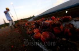 INDEF: Produksi Minyak Sawit Akan Terkoreksi