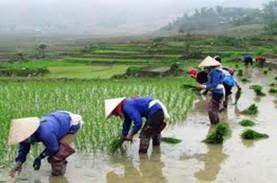 Setelah Disetop, Ekspor Beras Vietnam Melonjak pada…