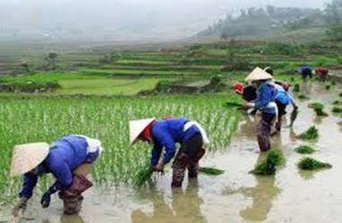 Setelah Disetop, Ekspor Beras Vietnam Melonjak pada Mei 2020