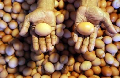 Ketahuan! Ada Telur Tak Laik Konsumsi di Paket Bantuan Sembako