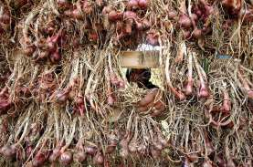 Produktivitas Tanaman Bawang Merah di Jatim Turun…