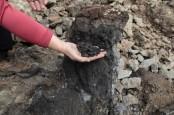Kebakaran Batu Bara di Siberia Sebabkan Kepunahan di Bumi 250 Juta Tahun Lalu