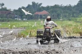 Pemberdayaan Petani di Ranah Perdagangan