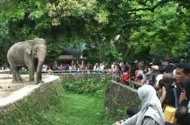 Hari Pertama Dibuka Ragunan Dikunjungi 328 Orang,…