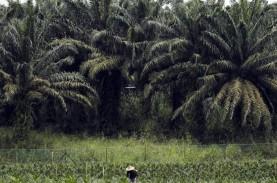 Harga Inti Sawit di Jambi Naik 3 Persen, Picu Kenaikan…