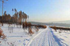 Suhu Siberia Mencapai 100 Derajat Fahrenheit, Rekor…