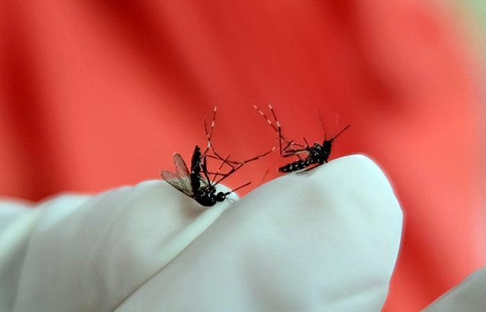 Petugas Dinas Kesehatan menunjukkan nyamuk saat melakukan kegiatan pemberantasan jentik nyamuk di kawasan kota Temanggung, Jawa Tengah, Rabu (6/2/2019). - ANTARA/Anis Efizudin