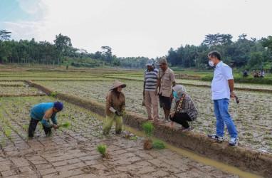 Penempatan Dana dari Pemerintah Bikin BRI Makin Fokus Selamatkan UMKM
