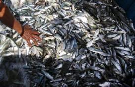 Papua Barat Siap Pasok Ikan dan Cabai Sulawesi, Maluku, Papua