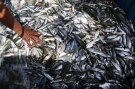 Papua Barat Siap Pasok Ikan dan Cabai Sulawesi, Maluku,…