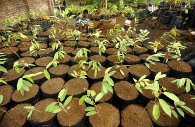 Pupuk Batu Bara Ciptaan Indonesia Kantongi Hak Paten AS
